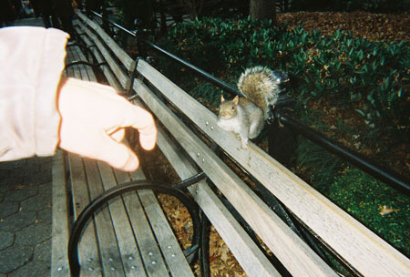 12-squirrel-new-york-city_smjpg