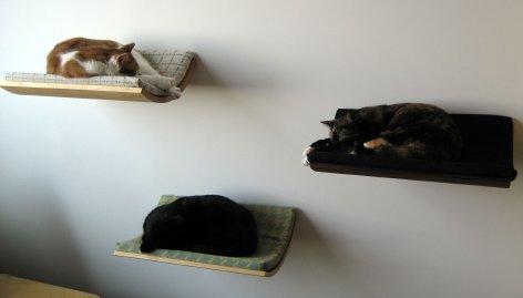 3_cats__2__fulljpg