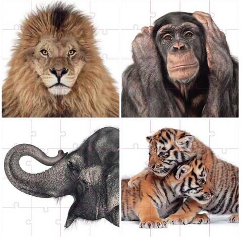 Andrew Zuckermann Creature Floor Puzzle