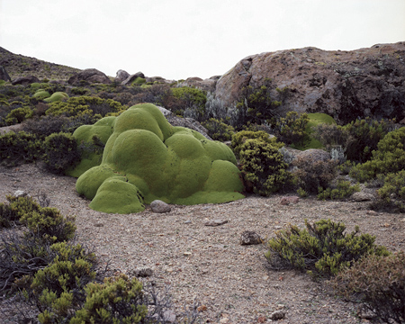 oldest living things | Rachel Sussman
