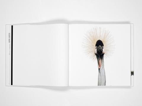 Bird by Andrew Zuckerman