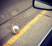 lost disco ball