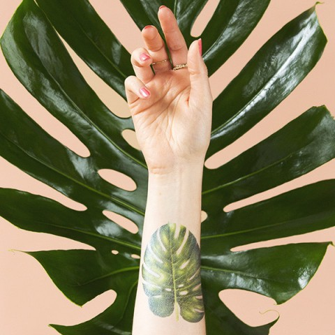 tattly_vincent_jeannerot_philodendron_monstera_web_applied_04_grande