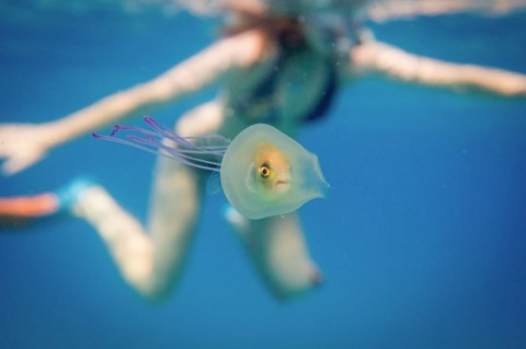 Fish inside a Jellyfish