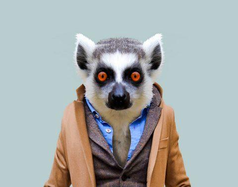 Dressed Lemur