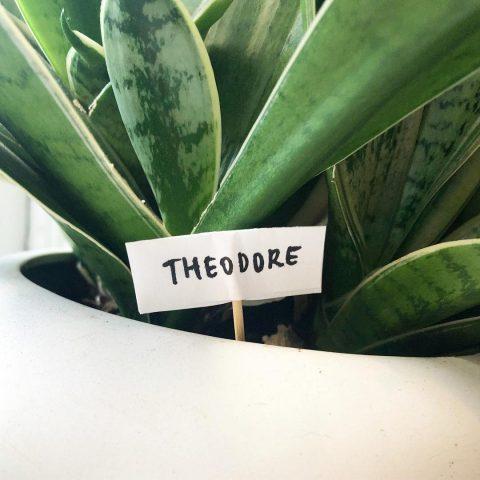swissmiss | Naming Plants