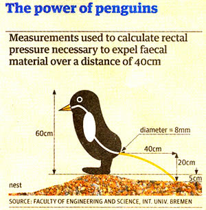 A114_penguin