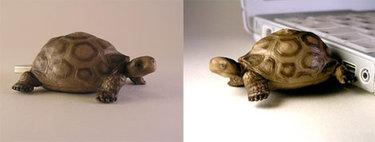 Turtlemoos