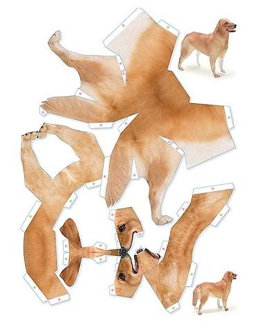 Unfolded_dog