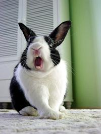 Bunny26_1